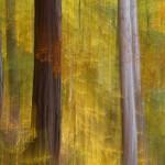 Mixed Autumn woodland