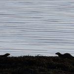 Otter-08