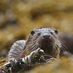Otter 11 P