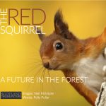 The Red Squirrel A Future in the Forest