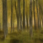Autumn Birches impression