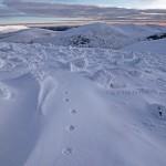 Fox tracks on Cairngorm